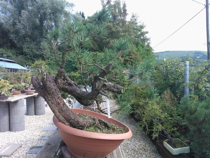 treestyler_1