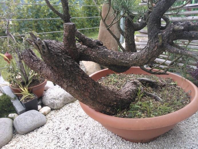 treestyler_3