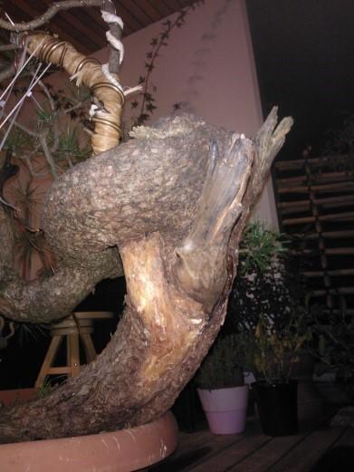 treestyler_5